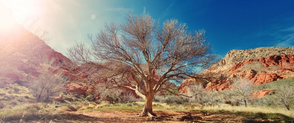 sun-desert-dry-tree