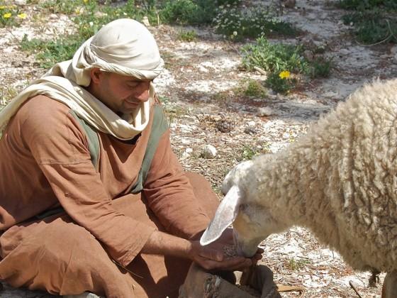 011-shepherds-sheep